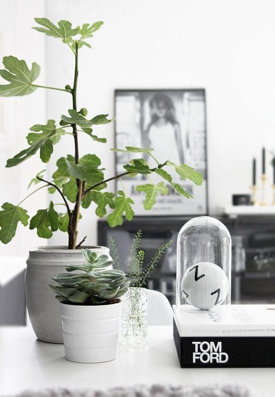 软装指南绿植篇(2):家庭亚博yabo88下载中搭配这些绿植,让家里更有活力!