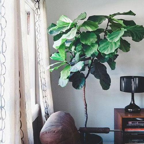 软装指南绿植篇(1):家庭亚博yabo88下载中搭配这些绿植,让家里更有活力!